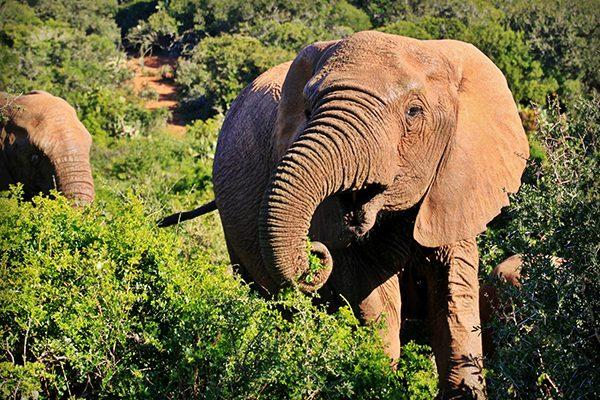 South Africa Gallery - Kruger Park