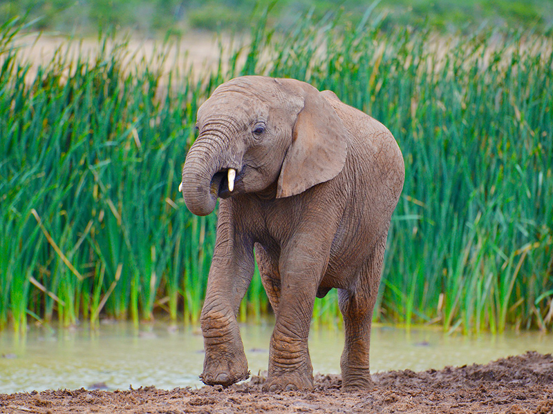 Addo Elephant Park Tour - Day Tour Garden Route