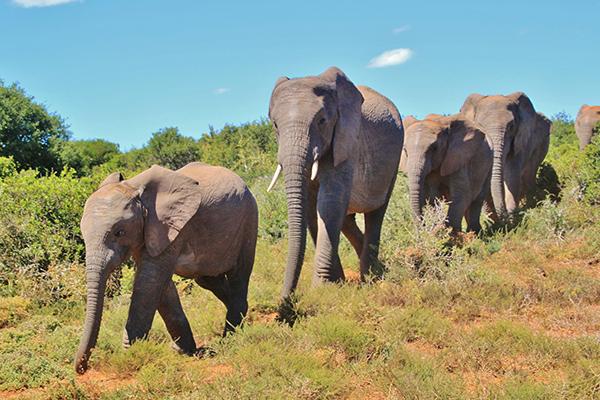 Addo Elephant Park Tour - Day Tour Garden Route