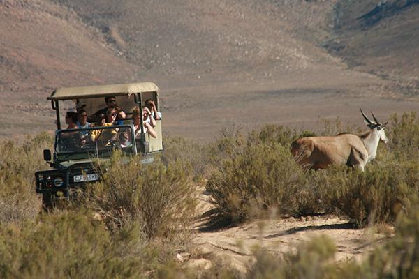 Full Day Aquila Safari tour