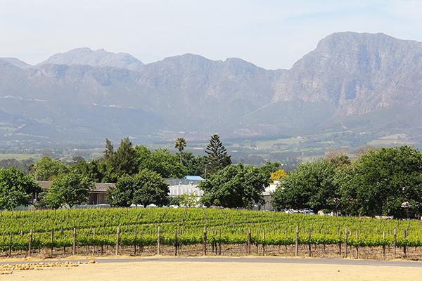 Full Day Winelands Tour - wine farm