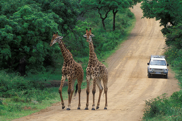 Hluhluwe-Umfolozi Park Tour - Day Tours