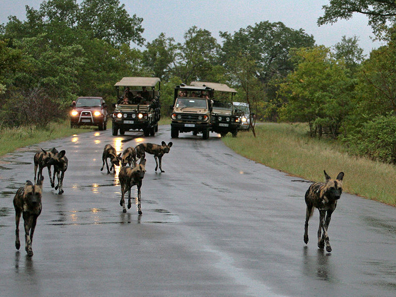 Kruger Park Open Vehicle Safaris - Day Tour