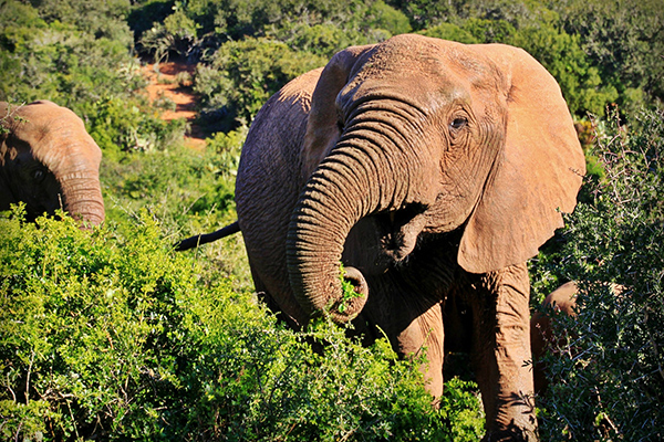 Kruger Park Uncovered - Cullinan Guided Journeys