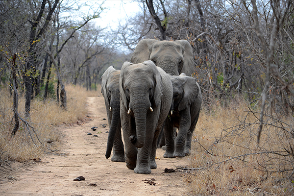 Kruger and the Kingdoms - Cullinan Guided Journeys