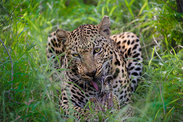 South African Surprise - Cullinan Guided Journeys