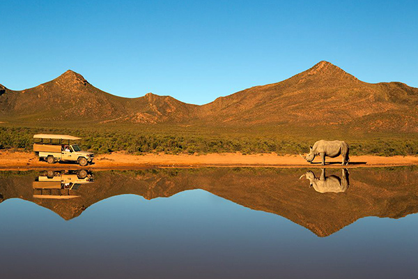 Rhino beside a lake - Aquila Safari