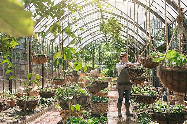 Inside the greenhouse Babylonstoren