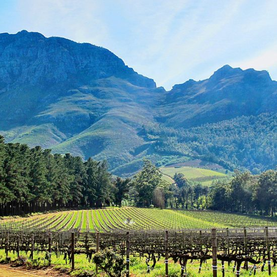 Wine farm with mountains in the background
