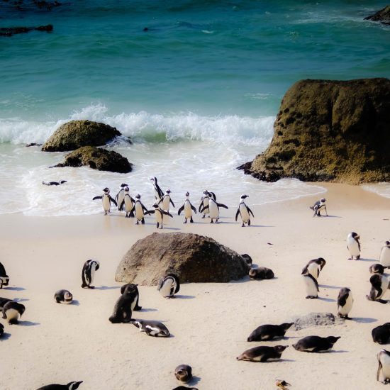 Penguin's on Boulder's Beach