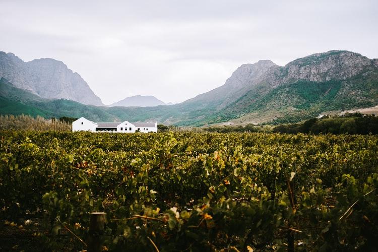 Cape Dutch Wine farm